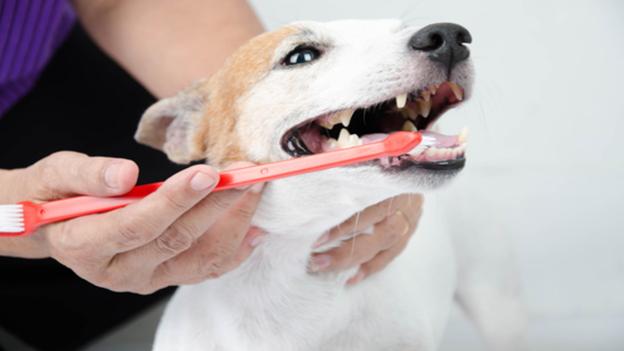 dog dental hygiene tips from capitola veterinary center in capitola california